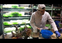 How one person made money on microgreens
