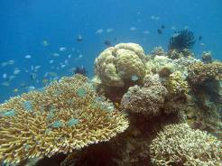 Perama LMMA has a beautiful healthy reef