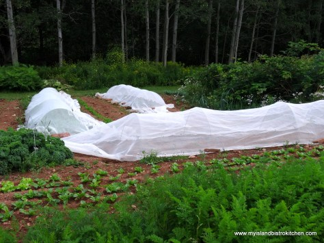 Netting to control for pests