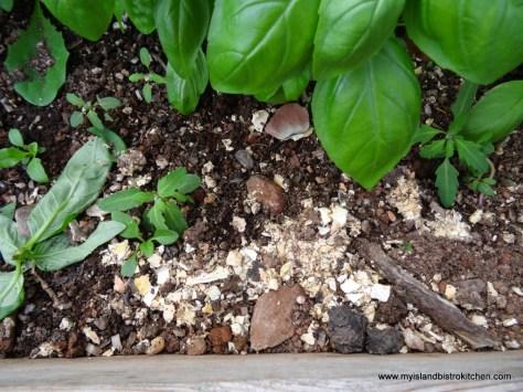 Crushed Crab Shells to Control Slugs