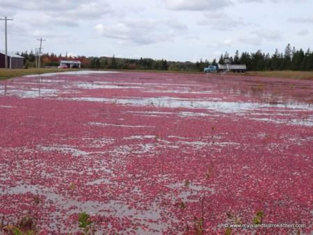 Flooded Cranberry Bog