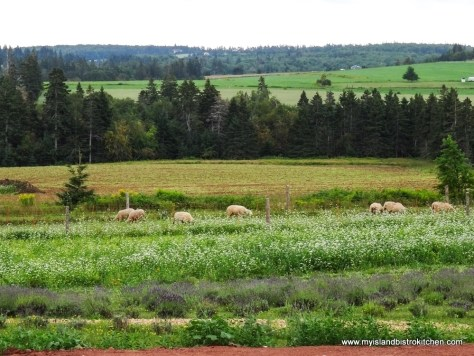 "The ""grasscutting crew"" at the Island Honey Wine Company, Wheatley River, PEI"