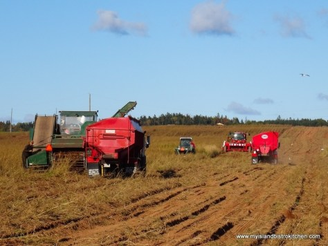 Potato Harvesting in PEI
