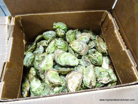 Box of Lucky Lime Variety of Oysters from Raspberry Point Oyster Co.