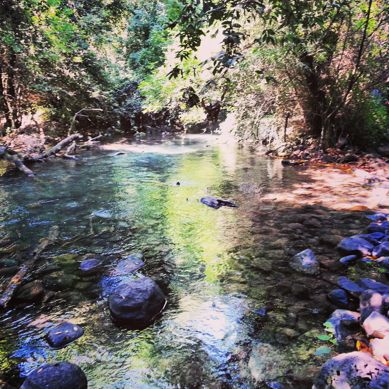 Tel Dan hike