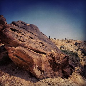 Fossilised / Petrified trees in the Large Crater (HaMakhtesh HaGadol)