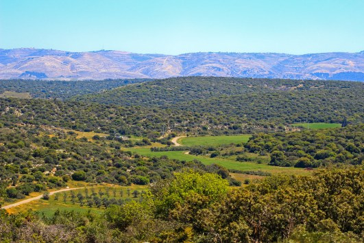 JudeanHill_vineyards_MyIsraelWineTours