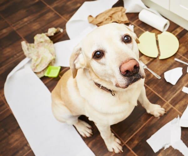 allontanare animali domestici da oggetti in casa