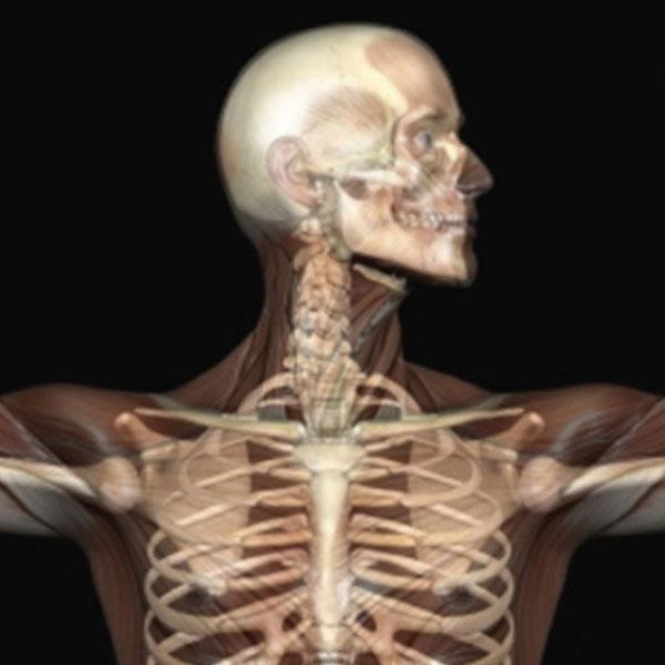 6 Gravi effetti sulla salute quando sei seduto tutto il giorno ossa deboli