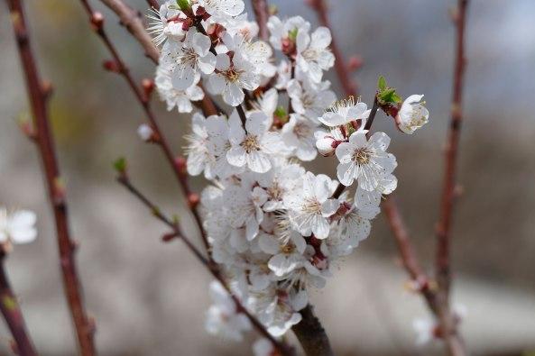 Весна в разгаре...