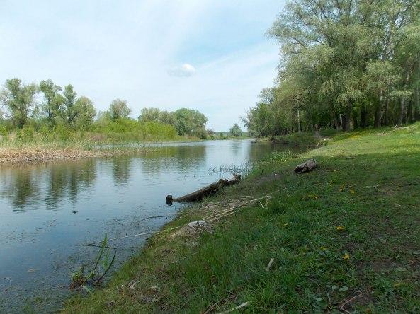 Берег реки густо заросший зеленью