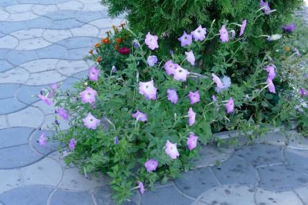 Цветы в торговом ряду