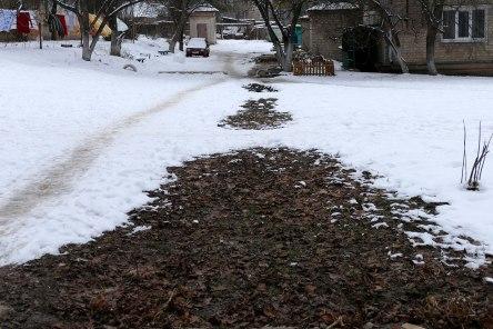 Зелененькая травка зимой