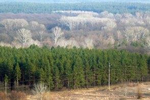 Сосновник, далее лиственный лес