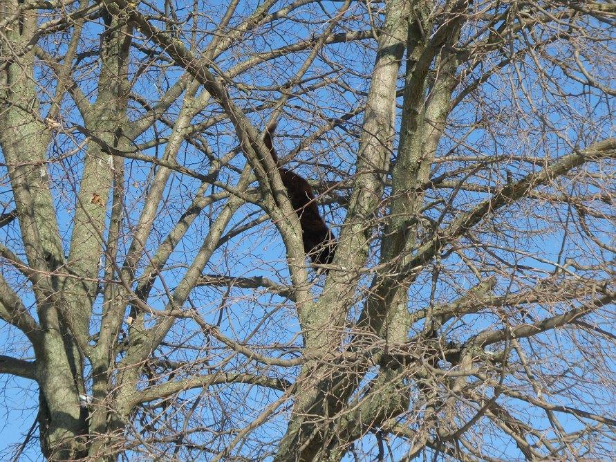 Кот забрался почти на самую верхушку дерева