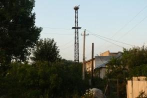 Гнездо аистов в Изюме по улице Замостянской у дома №32