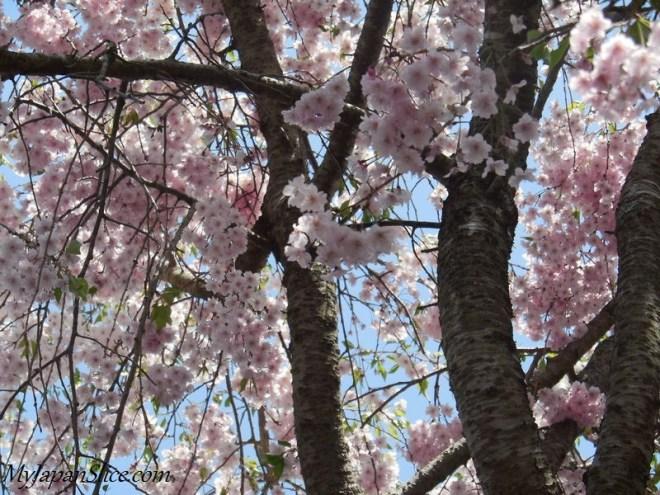Japan_Spring_Hakone