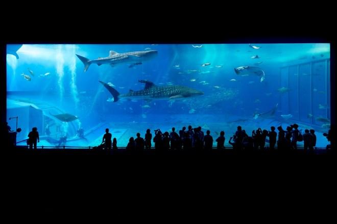 okinawa_churaumi_aquarium_1