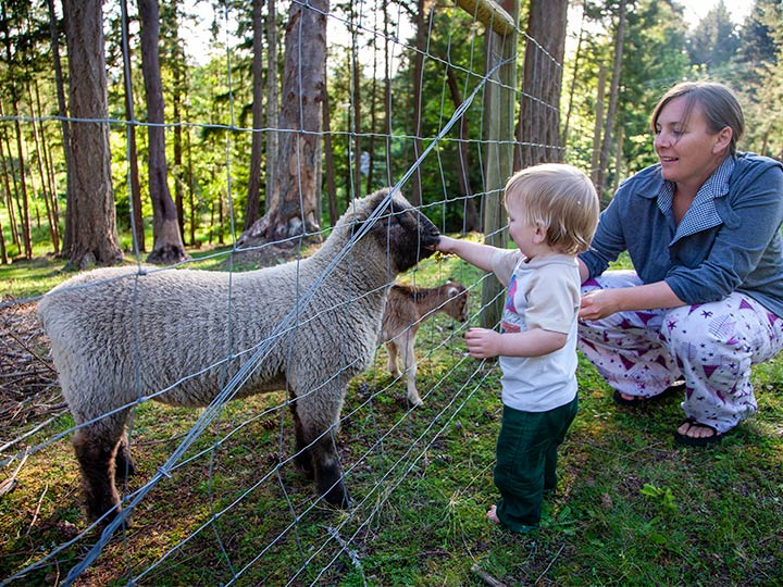 little boy petting a lamb