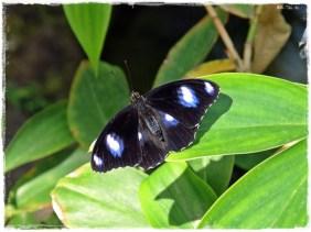 Beautiful Butterfly (III)