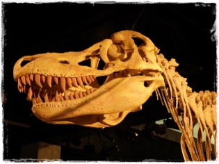 RAWR! Dinosaurs!