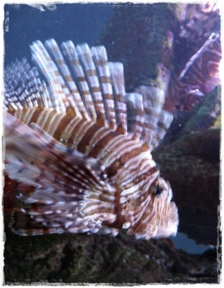 Funky striped fish! (I)