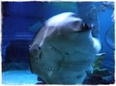 Manta ray! :D