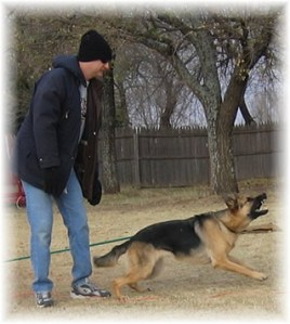 personal protection dog