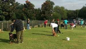 Dog Basic Obedience class