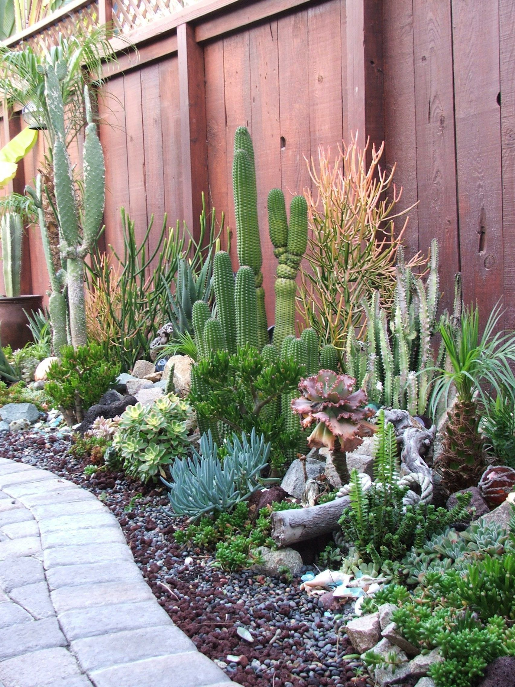 Outdoor Cactus Garden Ideas For The Best Looking Landscape on Backyard Patio Landscaping id=12420
