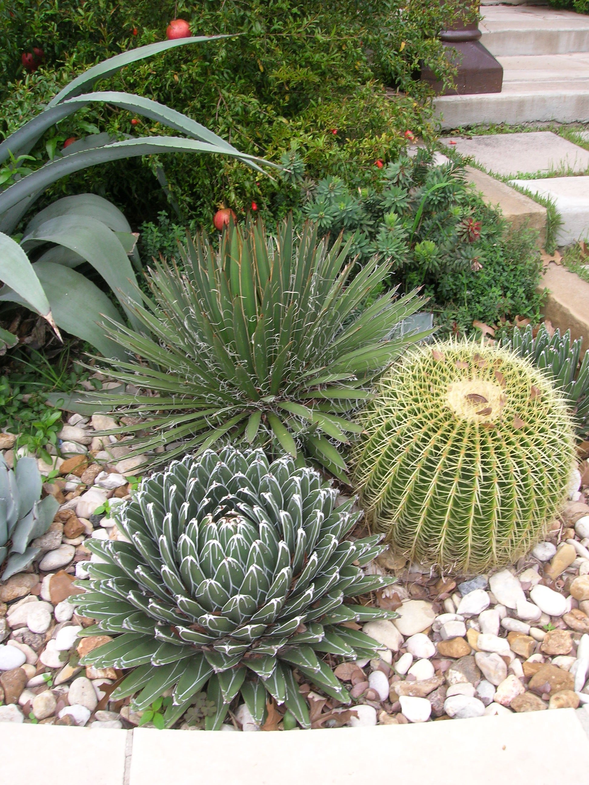 Outdoor Cactus Garden Ideas For The Best Looking Landscape on Tree Planting Ideas For Backyard id=93849