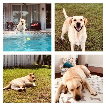 #puppyathome