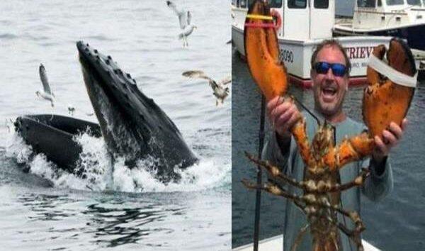 Nelayan kongsi detik cemas nyaris ditelan ikan paus