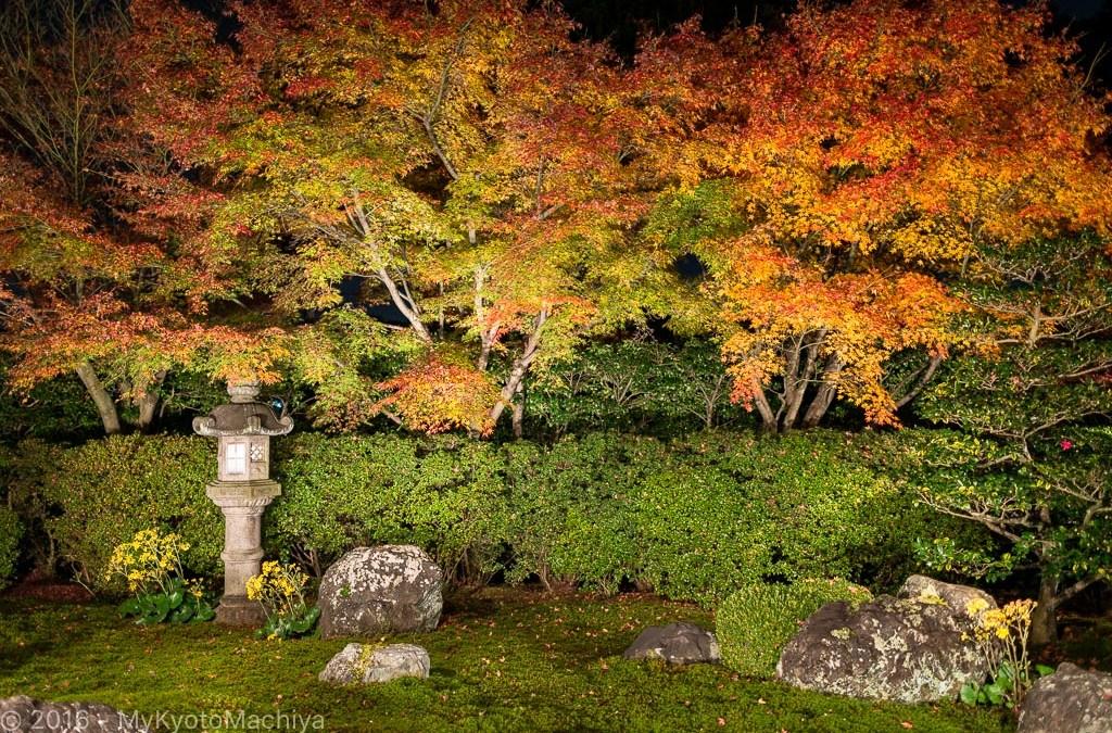 Light-Ups in Autumn