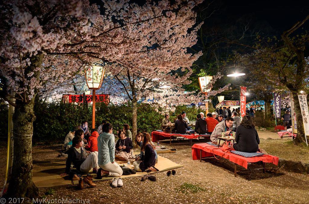 Hanami Party in Maruyama Koen