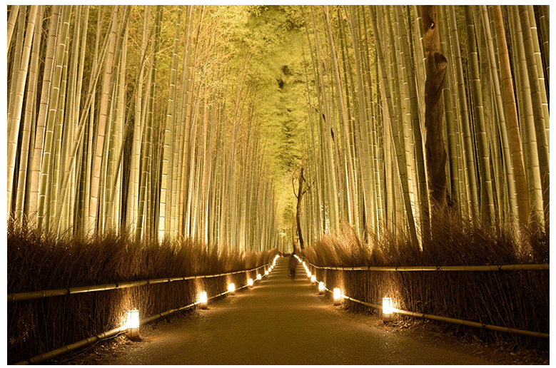 Light up of the Bamboo Grove