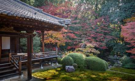 The garden of Zuishin-In Temple