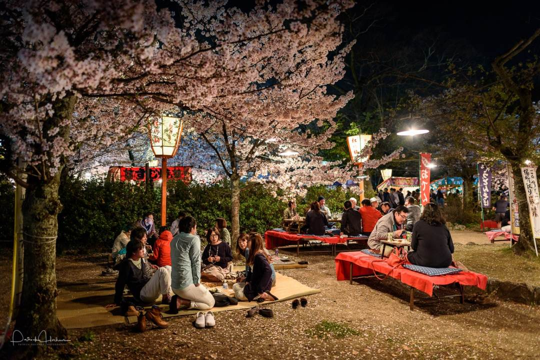 Hanami party by night in the Maruyama Koen Park, Kyoto