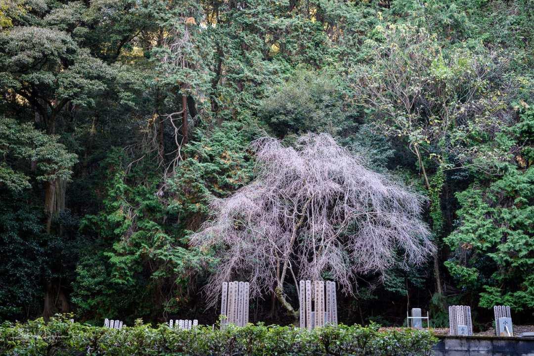 Tanizaki's Grave