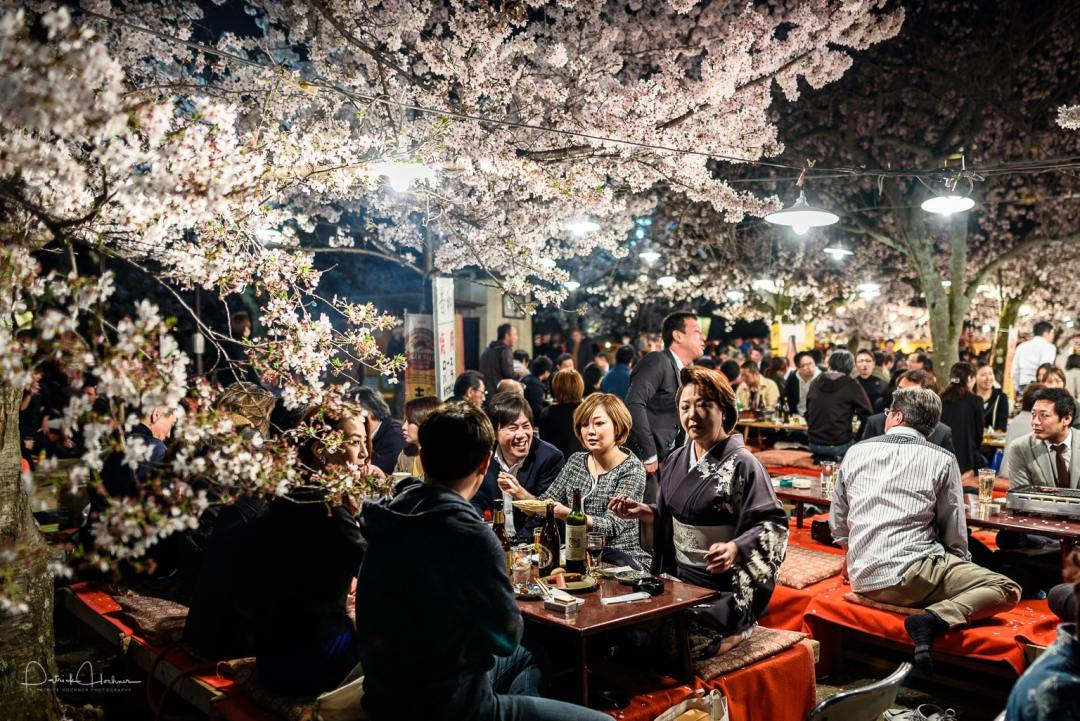 Hanami party by night in the Maruyama Koen Park, Kyoto