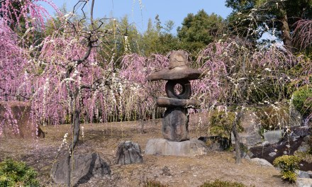 Spring has come at Jônangû Shrine