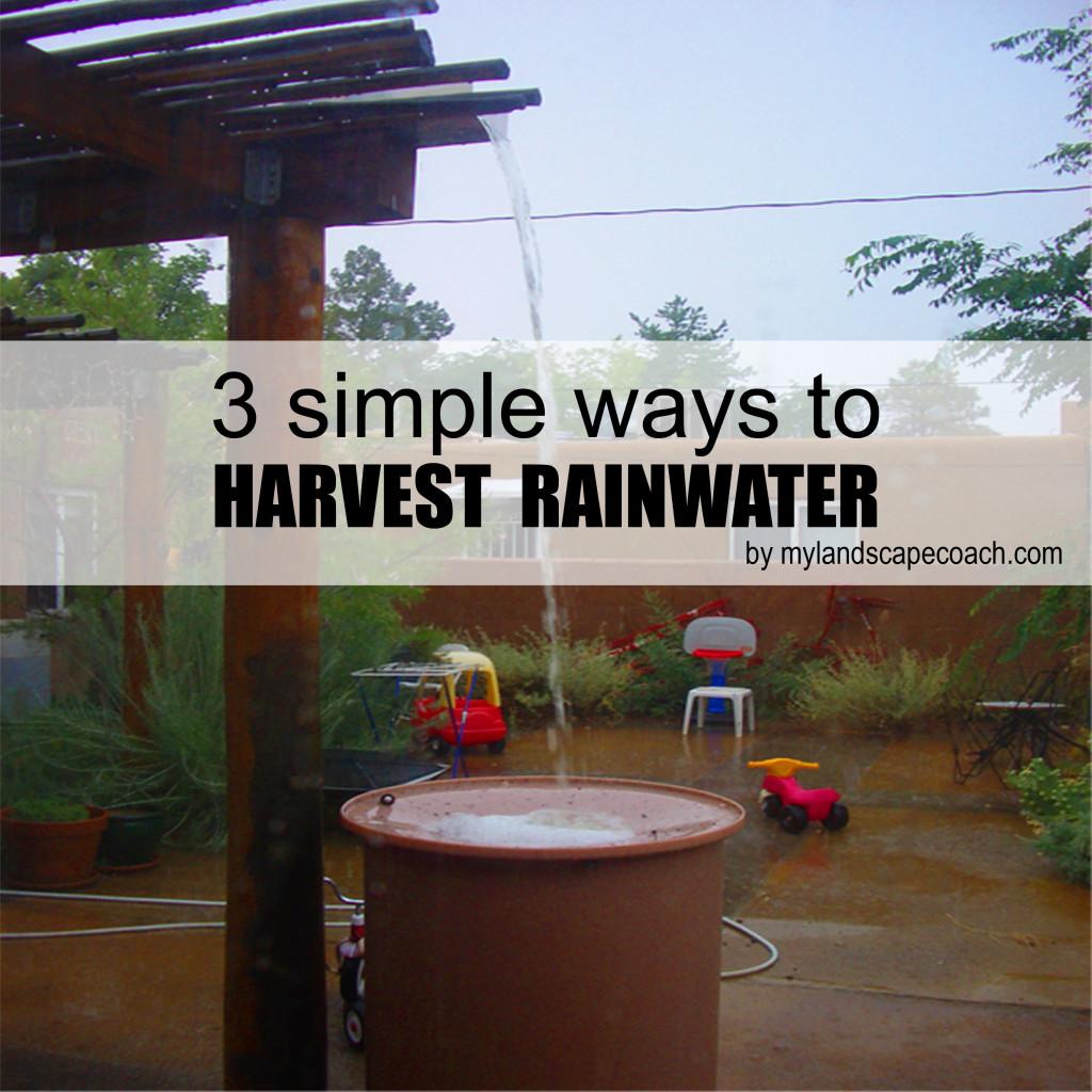 waterharvest1 copy