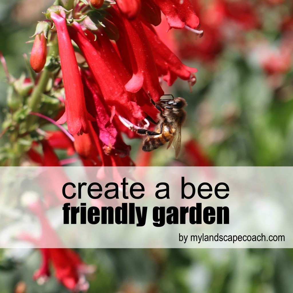 How to plant a bee friendly garden in New Mexico.