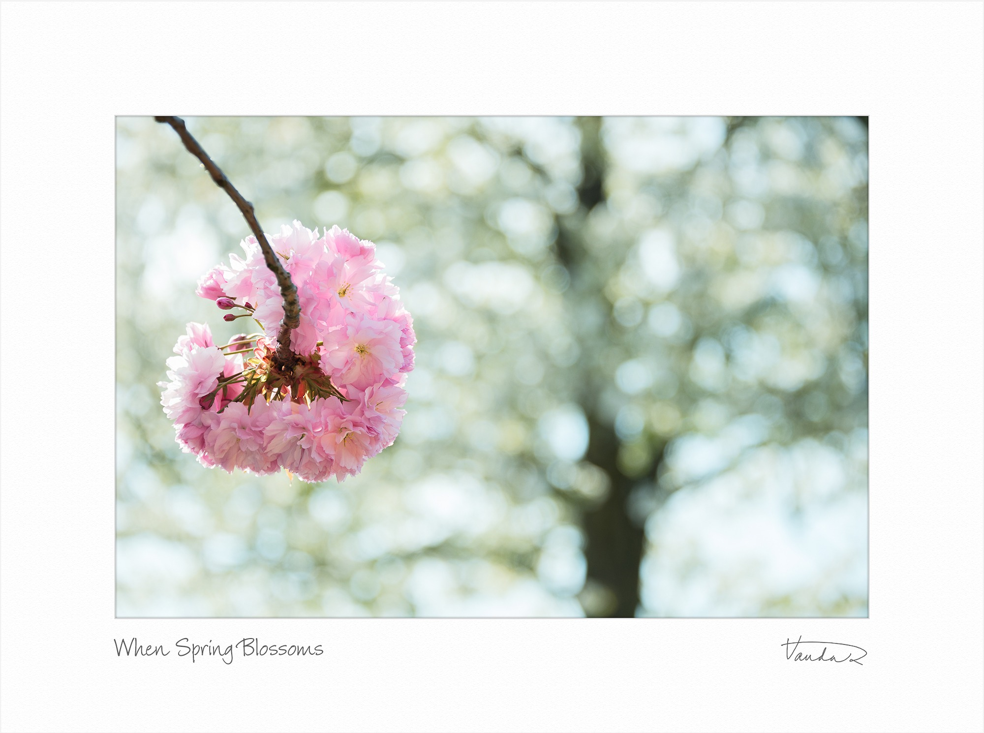 When Spring Blossoms