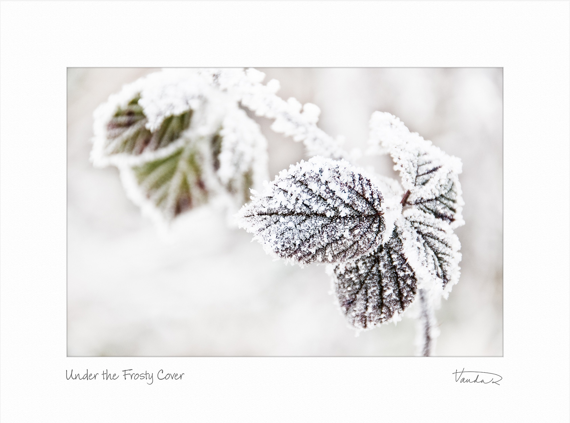 Under the Frosty Cover