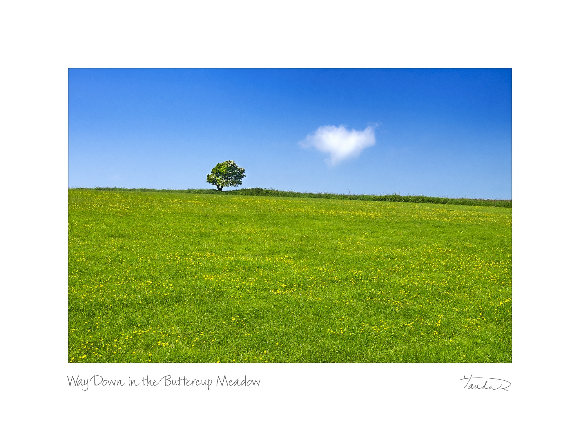 Way Down in the Buttercup Meadow