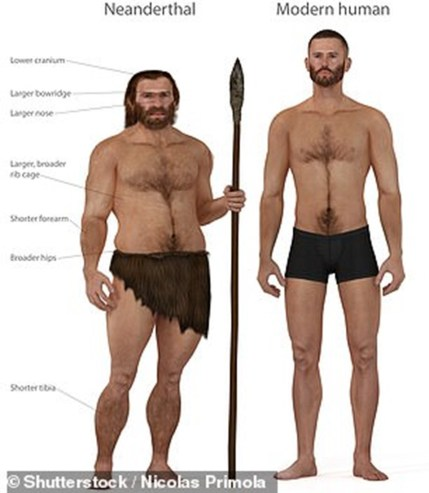 Neanderthals and their posture were better than the posture most men have today.
