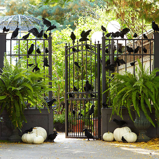 Gate Pumpkins 5 Sitting