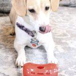 Irving's New Favorite Toy, Milk-Bone Active Treat Tumbler