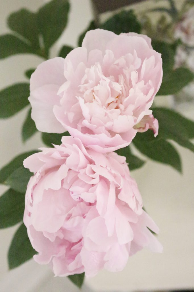 peony- flowers- gardening- vignette- how to - decorate- an entryway- entryway ideas- home decor- using flowers in decorating- faux milk glass- fiddle fig leaf- demijohn bottles- flower artwork- home design- painted furniture- pink peonies